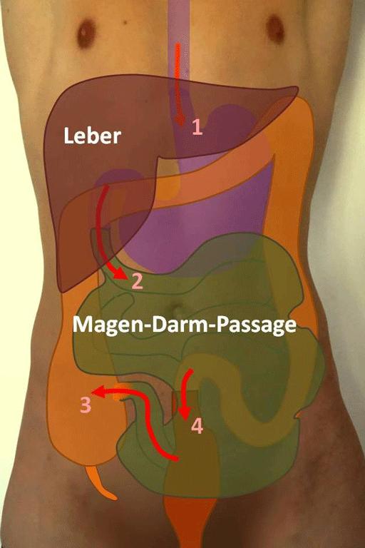 Der Darm: Anatomie und Funktion: klinik-hallerwiese.de